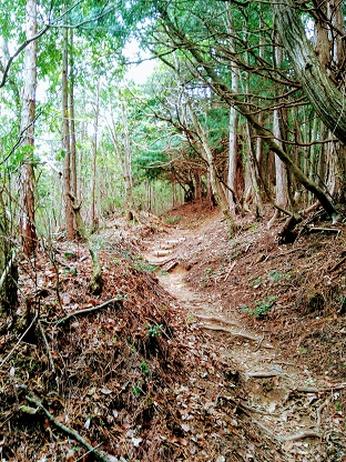 Mt Koya 005 Hike Trail