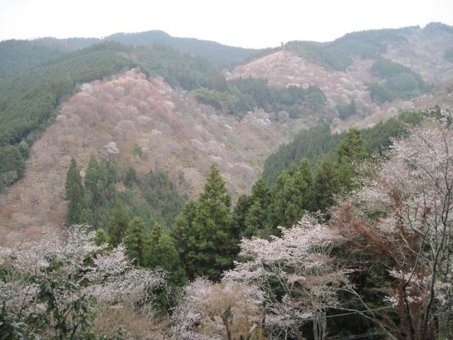 003 Yoshino Mountainside