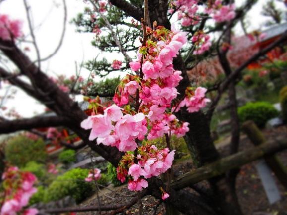 Garden flowers small