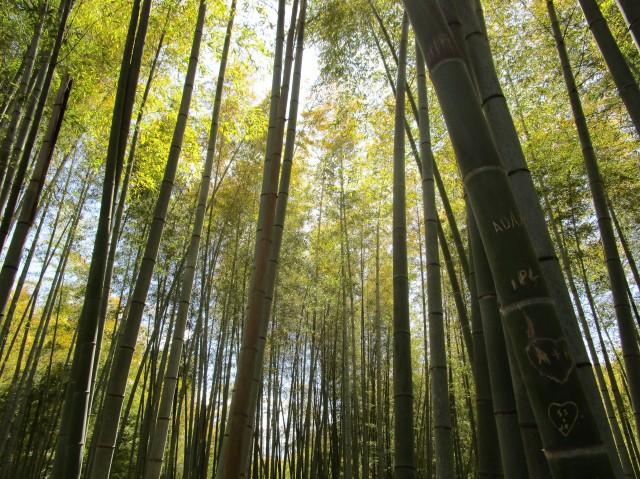 Fushimi Inari 2019 004 Bamboo