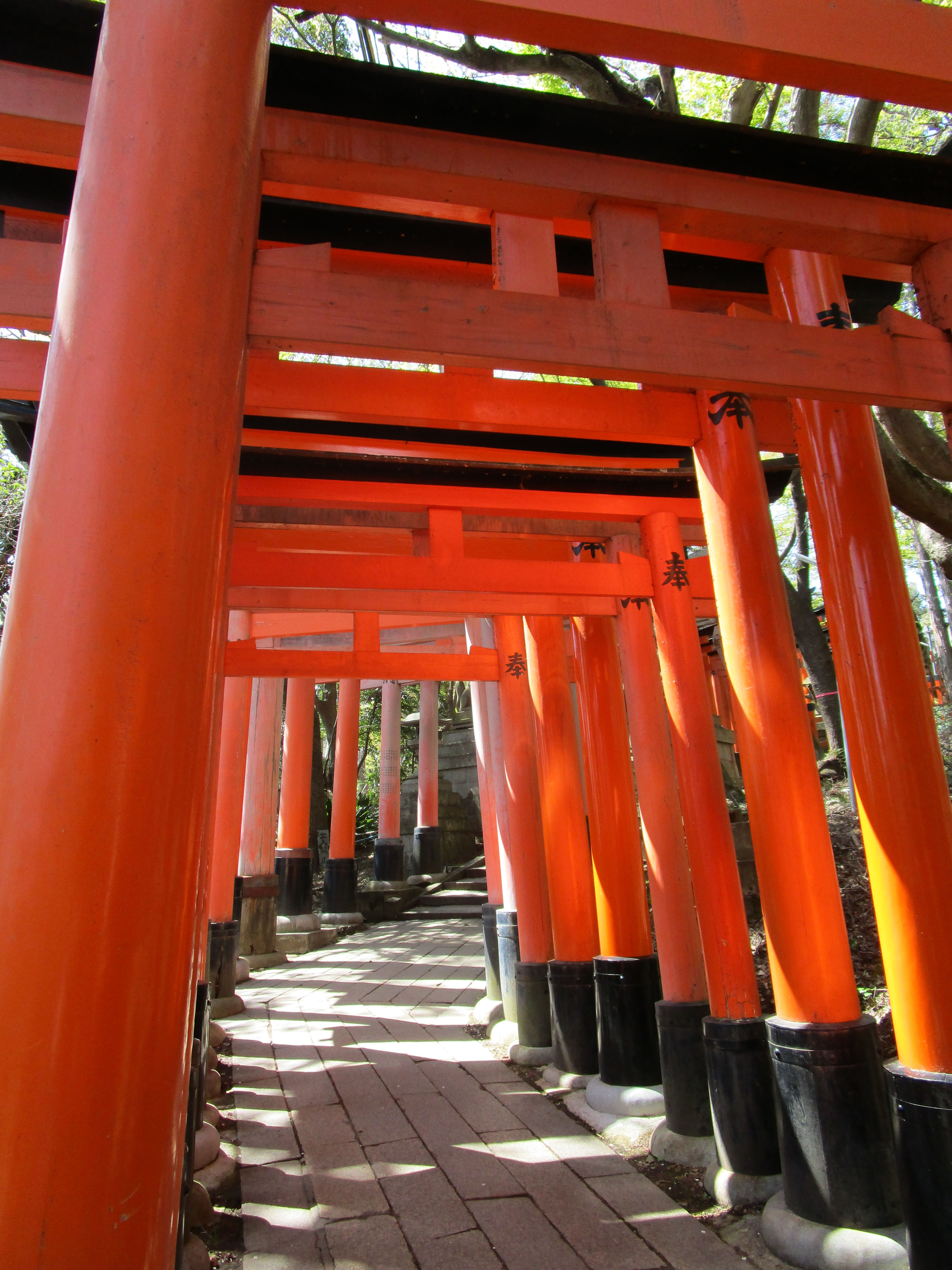 Fushimi Inari 2019 013 Gates Pretty