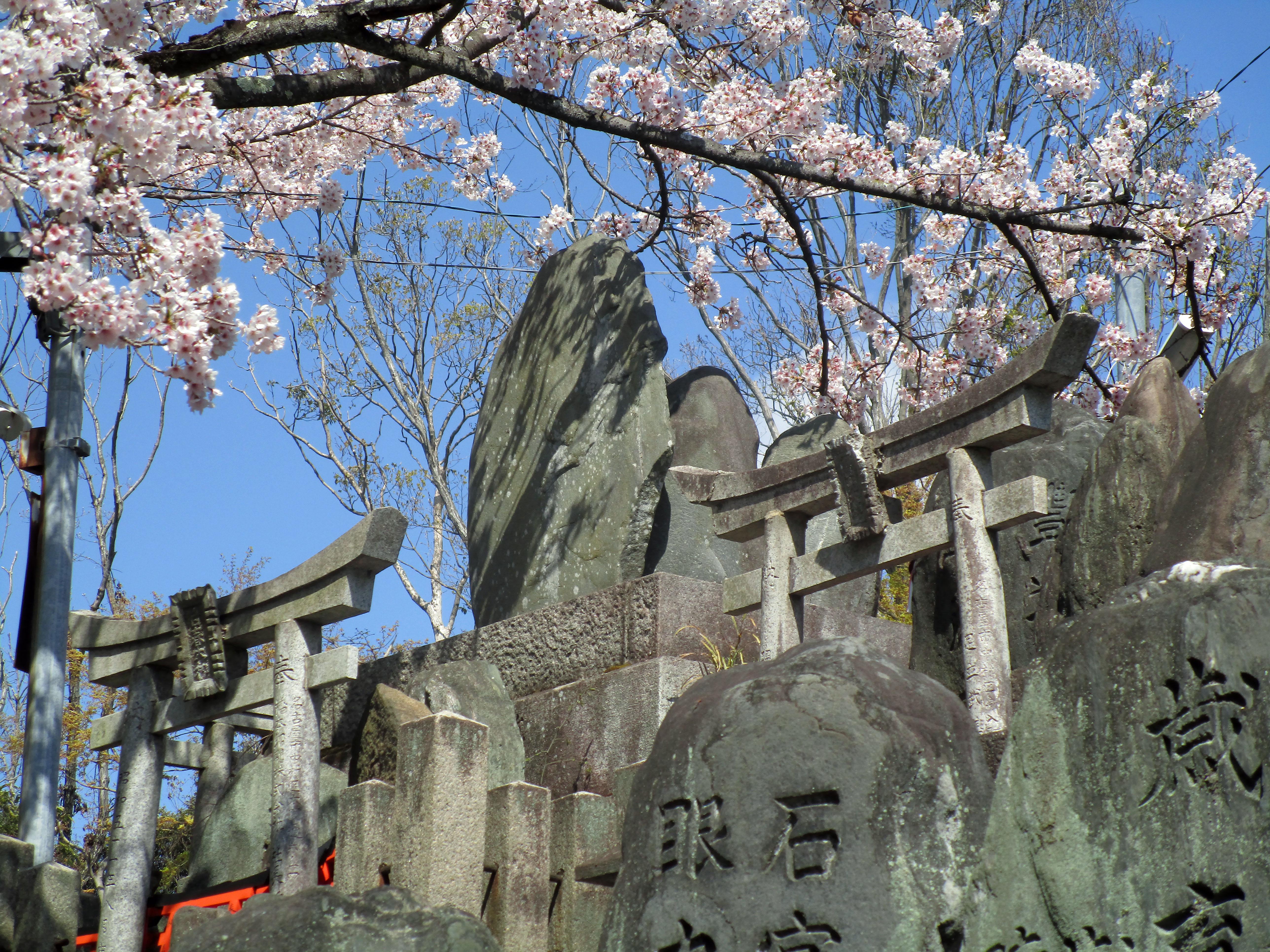 Fushimi Inari 2019 017 cemetery and cherry blossoms